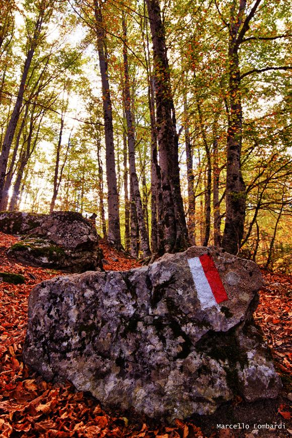 Segnaletica secondaria nel sentiero 950 nel Parco Nazionale del Pollino - Foto di Marcello Lombardi