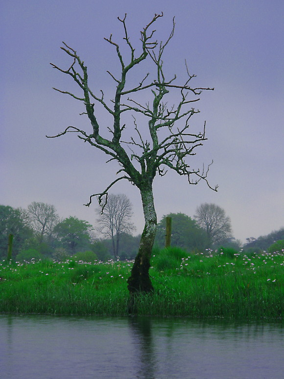 albero scheletrico nella bruma