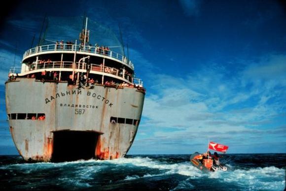 Volontari di Greenpeace in azione a difesa delle balene - www.greanpeace.org