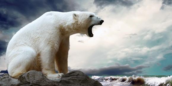 Esemplare di Orso Polare - http://best5.it/post/orsi-bianchi-5-fatti-curiosi/