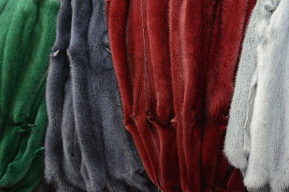 Immagine da http://www.rossipierangelo.com/images/img_pelli03.jpg