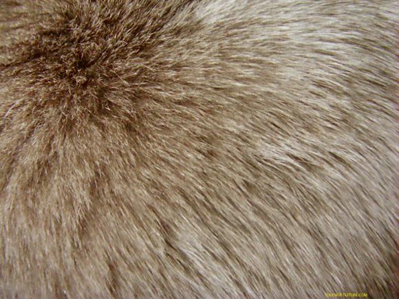Immagine da http://quagga.it/img/cms/materiali%20no/pellicce.jpg