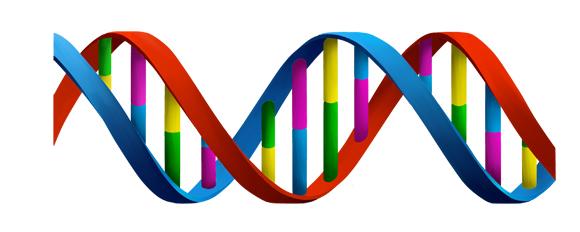 Rappresentazione del DNA