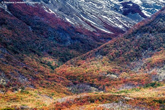 Esplosione di colori autunnali nella Patagonia Argentina (Parque Nacional Los Glaciares, area del Glaciar Perito Moreno, Santa Cruz, Patagonia Argentina)