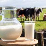 🐮 Cos'è il latte in polvere e quali sono le differenze col latte fresco
