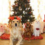 🎅 Come trascorrere il Natale senza inquinare (troppo)