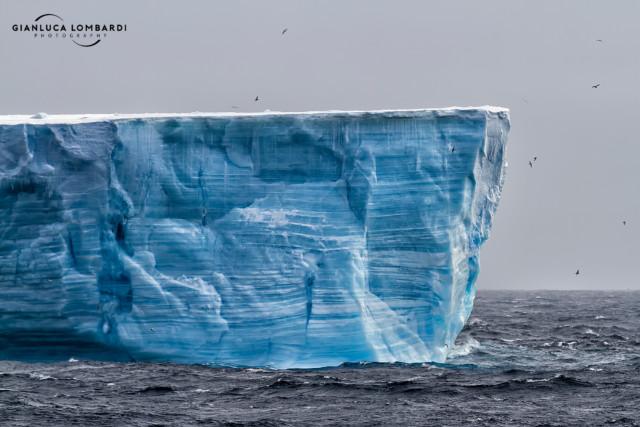 [21 Novembre 2015] Iceberg tabulare avvistato in prossimità delle Isole Shetland Meridionali. Era circondato da decine di albatri e procellarie in volo, e probabilmente era utilizzato come punto d'appoggio intermedio tra il mare e i nidi sulla terraferma. La foto purtroppo è poco nitida per via del vento molto forte.