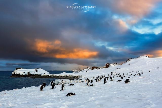 [21 Novembre 2015] Luci del tramonto su una colonia di Pinguini Gentoo (Pygoscelis Papua) su Half Moon Island (Isole Shetland Meridionali).
