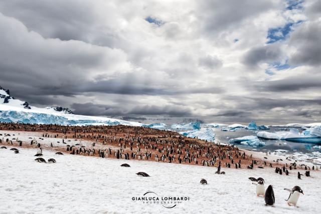 [22 Novembre 2015] Raggi di Sole illuminano a picco la rumorosa colonia di Pinguini Gentoo (Pygoscelis Papua) su Cuverville Island (Stretto di Gerlache, Penisola Antartica).