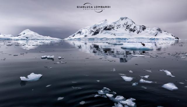 [23 Novembre 2015] Atmosfera e silenzio indescrivibili a Paradise Harbor (Penisola Antartica). Si nota a malapena un Cormorano imperiale (Phalacrocorax atriceps) su un iceberg a destra.