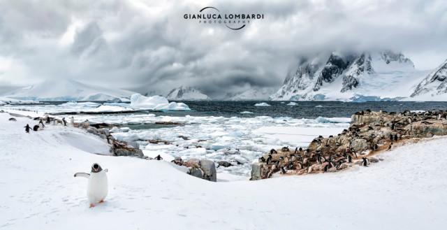 [24 Novembre 2015] Colonia di Pinguini Gentoo (Pygoscelis Papua) e Pinguini Adelia (Pygoscelis Adeliae) su Petermann Island. Sullo sfondo il Canale di Lemaire e la Penisola Antartica.