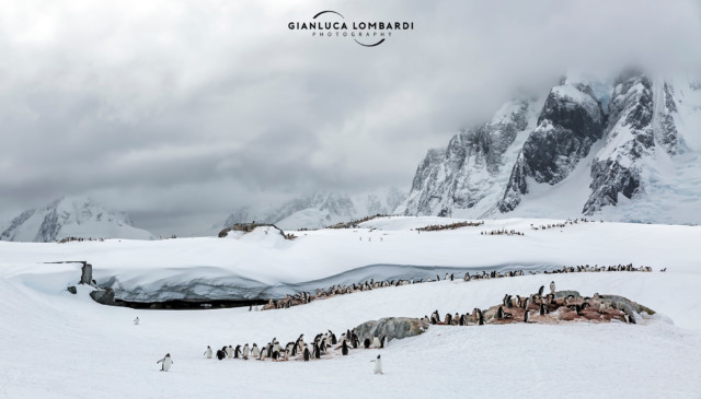 [24 Novembre 2015] Colonie di Pinguini Gentoo (Pygoscelis Papua) e Pinguini Adelia (Pygoscelis Adeliae) su Petermann Island. Sullo sfondo le montagne della Penisola Antartica.