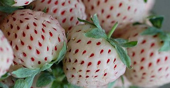 frutta strana