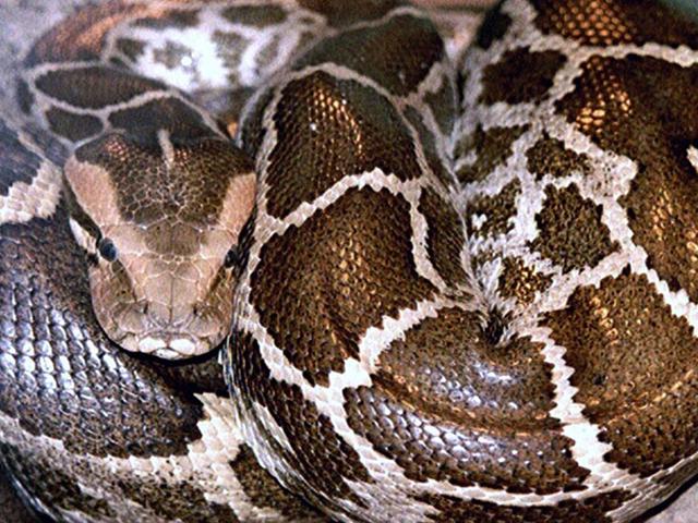 Avere un serpente