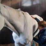 🐴🐶🐐 Ecco Aida, fare il veterinario tra cavalli, caprette e cagnolini