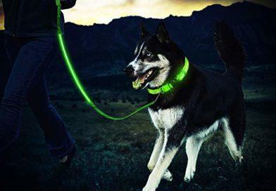 🐶 3 idee regalo originali (e intelligenti) per il tuo cane