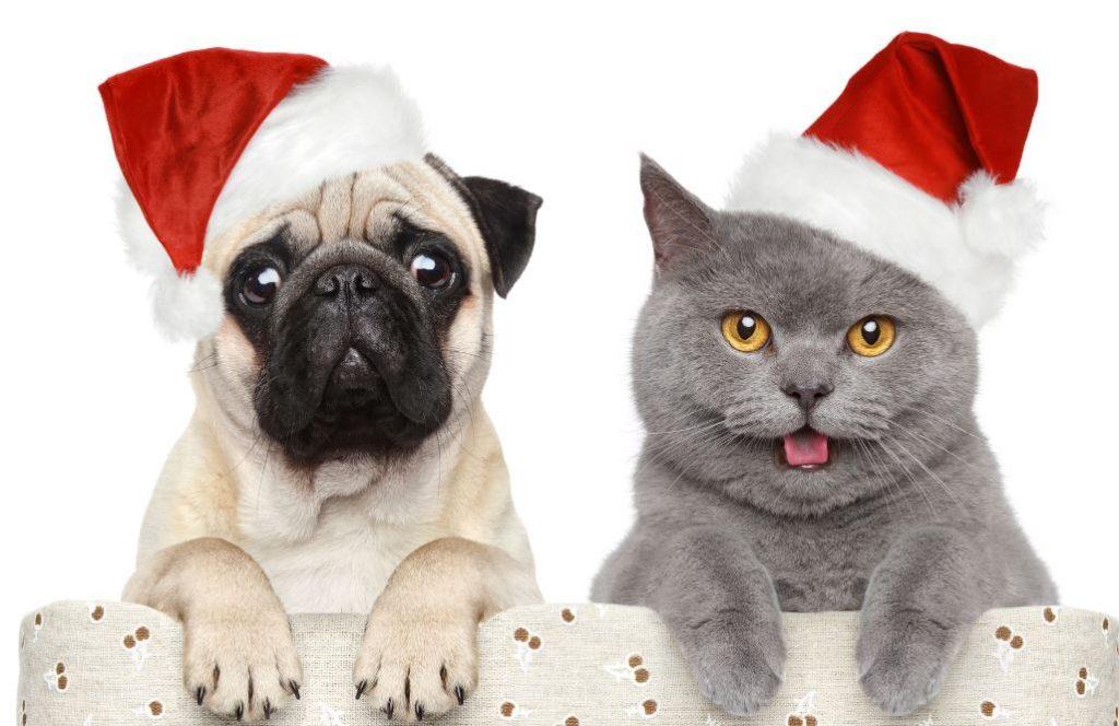 cani e gatti natale