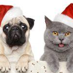 🎄 Le canzoni di Natale cantate dai nostri amici cani e gatti