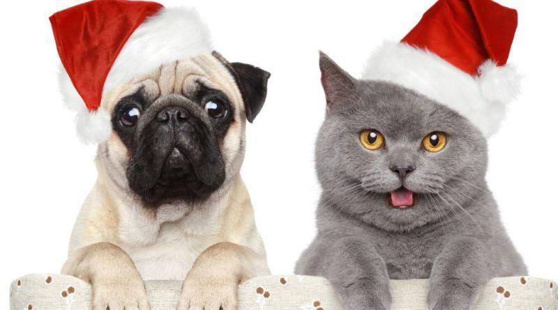 gatti e caninatale