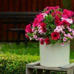 Vasi per le piante, prodotti di qualità per il vostro pollice verde