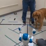 I cani ubbidiscono ai comandi dei robot come se fossero umani