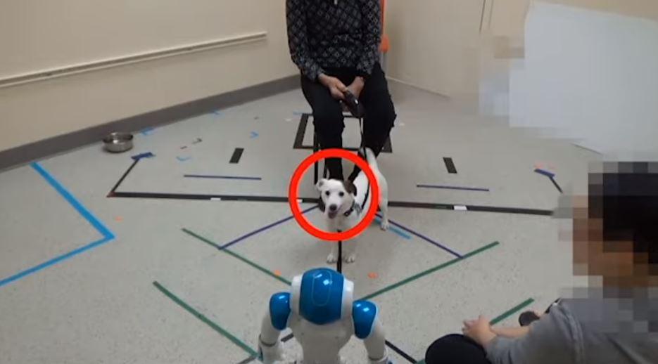cani e robot